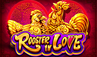 ROOSTER IN LOVE